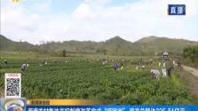 """海南农村集体产权制度改革完成  """"摸家底"""" 资产总额达225.51亿元"""