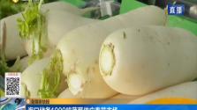 海口储备1000吨蔬菜供应春节市场