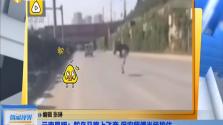 云南昆明:鴕鳥馬路上飛奔 保安師傅當場按住