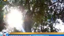 海南继续发布高温四级预警 9市县气温将达37°C
