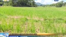 琼中:推广山兰稻农业 发展生态文化旅游