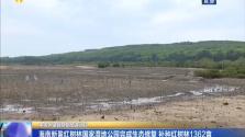 海南新盈紅樹林國家濕地公園完成生態修復 補種紅樹林1362畝