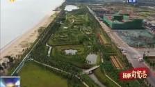 海口江東防潮堤與海岸帶生態修復項目完工 9月交付使用