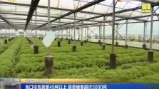 海口投放蔬菜45种以上 蔬菜储备超过3000吨
