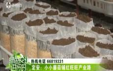定安:小小蘑菇铺红旺旺产业路