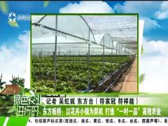 """东方板桥:以花卉小镇为契机 打造""""一村一品""""高效农业"""