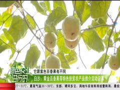 白沙:黃金百香果等特色扶貧農產品推介活動啟幕