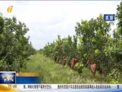 臨高舉行扶貧產品推介會 7成扶貧水果已被36家省外采購商訂購