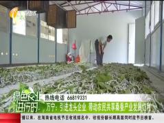 万宁:发展种桑养蚕产业带动村民致富