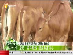 澄迈:养牛脱贫 提振致富信心