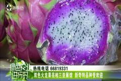 双色火龙果亮相三亚展馆 新奇特品种受欢迎