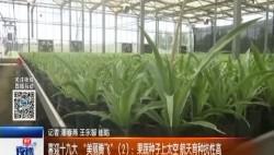 """喜迎十九大""""美丽腾飞""""(2):果蔬种子上太空 航天育种抗性高"""