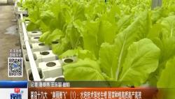 """喜迎十九大""""美丽腾飞""""(1):水培技术落地生根 蔬菜种植高质高产高效"""