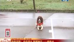 狗年说狗:犬中战士 救援神兵一一搜救犬