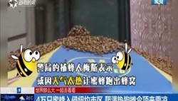 4万只蜜蜂入侵纽约市区 爬满热狗摊伞顶来乘凉