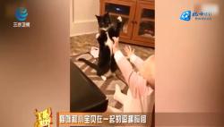 好可爱!猫咪和小宝贝在一起的逗趣瞬间