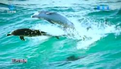 """鲸豚救护小组:""""海上精灵""""的守护者"""