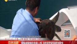 海龟被网缠住命悬一线 边检民警紧急救治放生