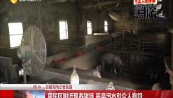 居民区附近现养猪场 恶臭污水引众人抱怨