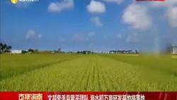 文昌牵手袁隆平团队 海水稻万亩研发基地将落地