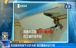 天花板突然掉下40斤大蛇 竟已藏身长达10年