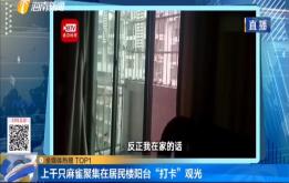 """上千只麻雀聚集在居民楼阳台 """"打卡""""观光"""