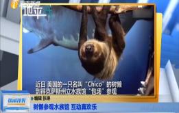 樹懶參觀水族館 互動真歡樂