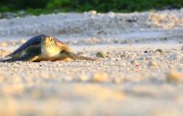 """""""我们的海洋""""公益短视频:我和小海龟"""