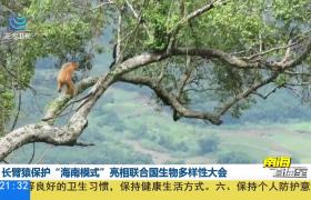 """长臂猿保护""""海南模式""""亮相联合国生物多样性大会"""