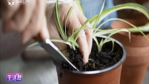 教您几招巧用大蒜 让盆栽变枝繁叶茂