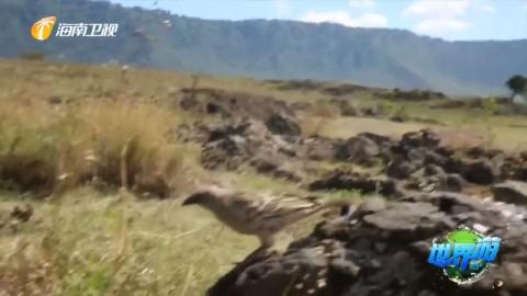 坦桑尼亚·共生之地