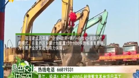 昌江:投資1.3億元 6000頭種豬繁育基地項目開工