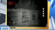 四川:黑熊进村偷吃蜂蜜 一晚吃掉15斤