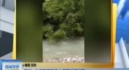 四川:生态环境良好 大熊猫冲浪过河