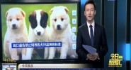 海口通告禁止饲养的犬只品种和标准