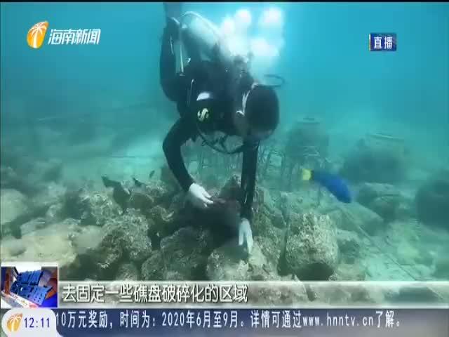 """自贸港奋楫者 李秀保:修复珊瑚礁的""""工程师"""""""