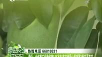 澄迈:今年推广优势作物1.16万亩 将打造福山荔枝等3座共享农庄