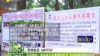 海南橡胶:胶林养牛发展循环经济 打造新型胶园综合体