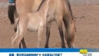 新疆:普氏野马种群持续扩大 今年喜添47匹新丁