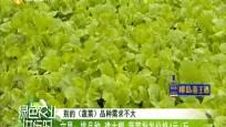 文昌:潭牛常年蔬菜基地供应充足 每天上市5000斤蔬菜