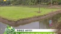 """儋州:发展海南热带全季节小龙虾产业""""农户""""化身变""""股东"""""""