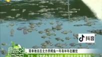 东方:拓宽鳄鱼养殖产业链 探索扶贫致富康庄路