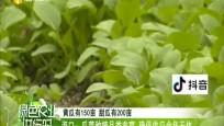 海口:瓜菜种植品类丰富 确保供应全面无休