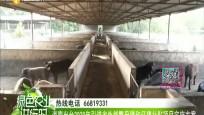 海南出台2020年引进外省能繁母猪和仔猪补贴项目实施方案