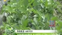海南检测机构免费检测 助力驰援湖北武汉等地农产品质量安全