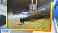女兒打電話報警:爸爸開車撞了媽媽的車