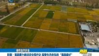 """彭剛:海南著力推進農業現代化 探索生態優先的""""海南模式"""""""