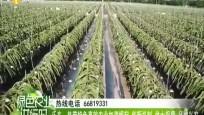 乐东:热带特色高效农业加速崛起 创新机制 做大规模 品牌兴农