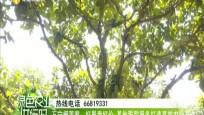 万宁榴莲蜜:好果卖好价 基地跟踪服务打造高效农业产业