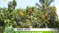 臨高:特色產業助農強 帶動農戶穩增收